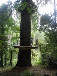 Trees Adventure Den 161