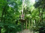 Trees Adventure Den 188